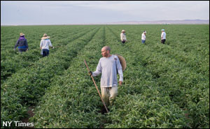 nyt-calif-farmworkers